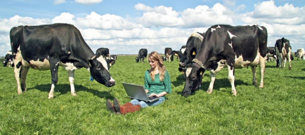 woman on laptop in field with cows