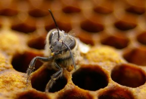 The Fascinating Life of Bees in 10 StunningImages